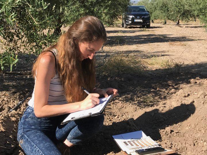 Mercacei publica un articulo sobre las conclusiones del nuestro proyecto H2Olivetree